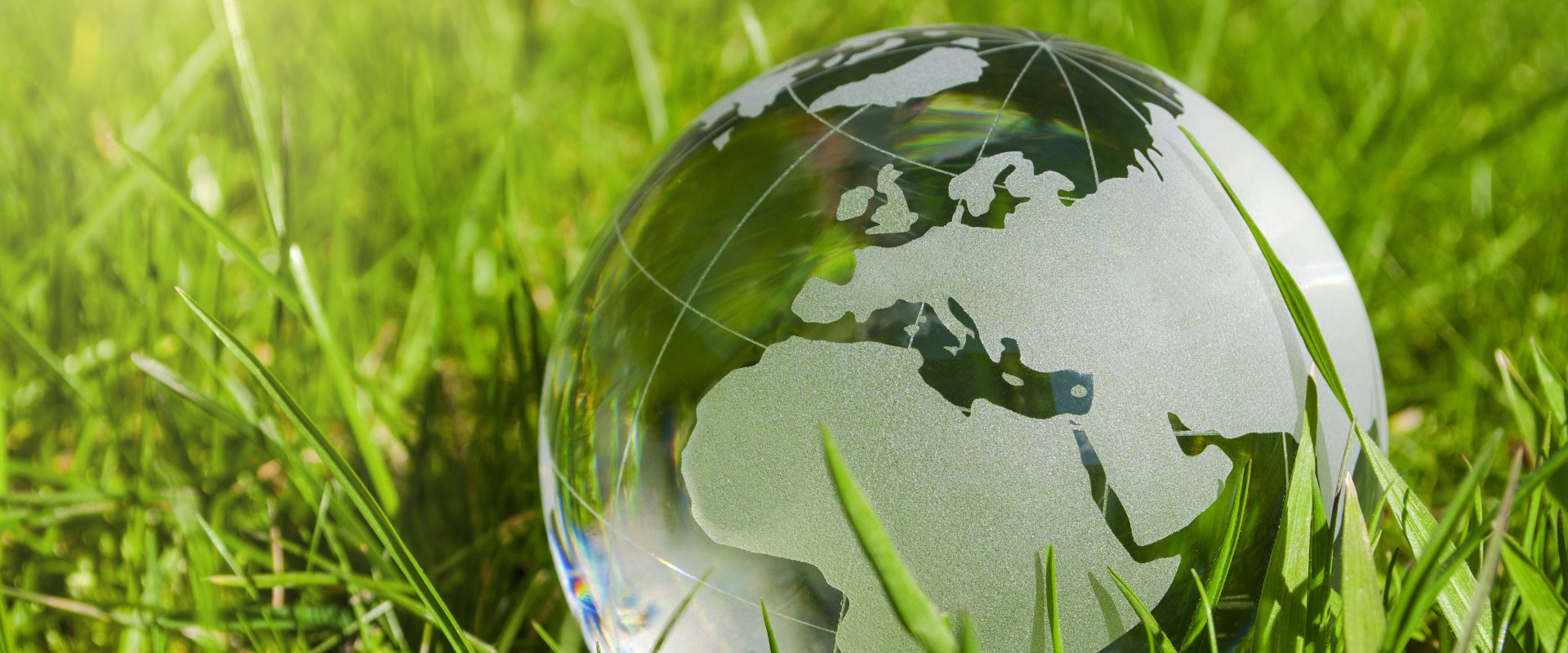 Glass globe in juicy grass