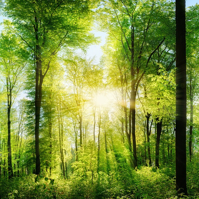 Deciduous green forest flooded with sunlight